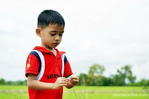 gambar di sawah padi