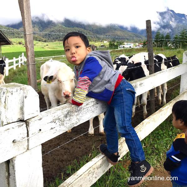 desa dairy farm kota kinabalu