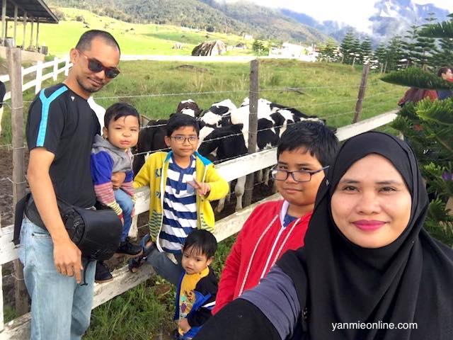 desa dairy farm kundasang