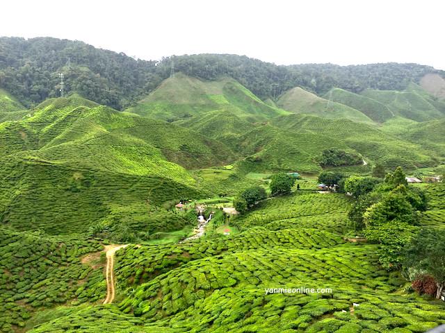 ladang teh bharat cameron highland